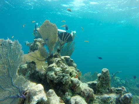 Blue, clear waters in Honduras