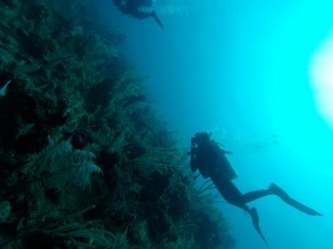 An ocean of blue!